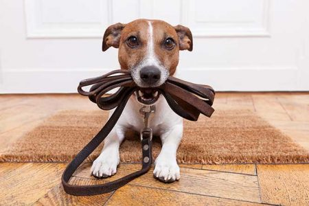 Trained Dog with Leash